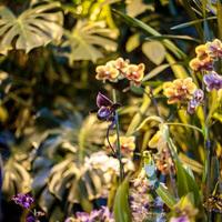 Фестиваль орхидей - Пафиопедилум среди Фаленопсис