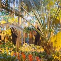 Фестиваль орхидей. Общий вид