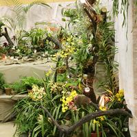 Эпифитное дерево и садик Цимбидиумов