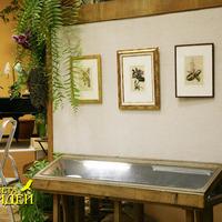 Стенды с гравюрами, внизу под стеклом - чашки, блюдца, украшенные орхидеями