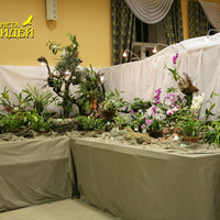 Экспозиция, основу которой составляют цветущие  Целогины