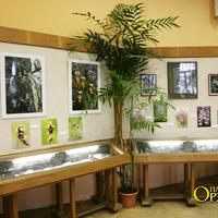 Фотографии Л.В. Аверьянова тропических орхидей