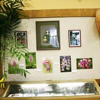 Фотографии наземных орхидей, произрастающих и в России