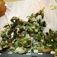 Миниатюрные орхидеи, уютно расположившиеся на корнях бамбука
