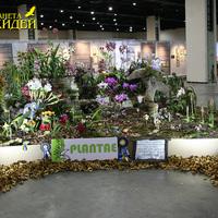 Призеры выставки WOC 21 Cattleanthe и гибридные Каланты