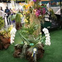 Angraecum sesquipedale на выставке WOC21