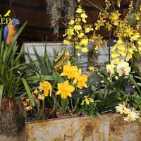 Экспозиция Австралийского общества любителей орхидей на выставке WOC 21