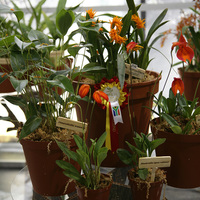 Круглый столик с Masdevallia ignea vallemar и Pleurothallia truncate на выставке WOC 21