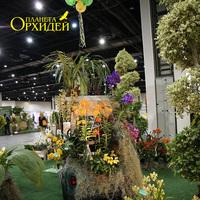 Ansellia africana - широко распространенная орхидея в ЮАР