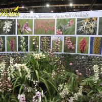 Плакат, посвященный орхидеям Южной Африки