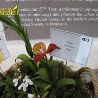 Disa uniflora Yellow, Disa uniflora Red на выставке WOC 21