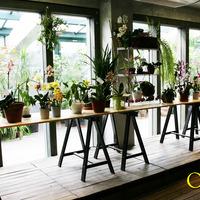 Освещенные солнцем орхидеи приветствовали посетителей