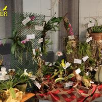 Разнообразие видовых орхидей вызывало радость  и удивление