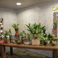 Различные способы выращивания орхидей