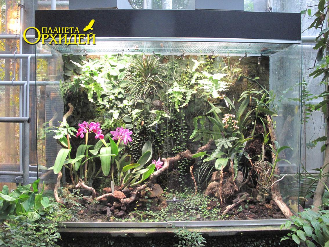 Как сделать флорариум для орхидей своими руками 85