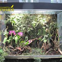 Флорариум с гибридными орхидеями