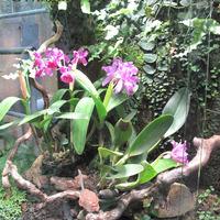Маленькая оранжерея с орхидеями, папоротниками и Тилландсией