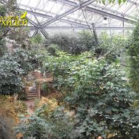 Оранжерея тропических растений