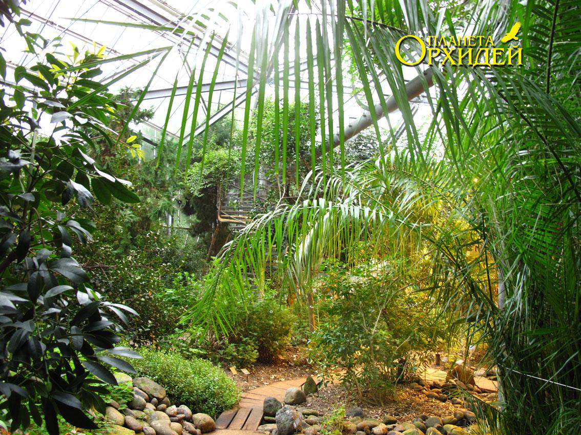 Оранжерея тропических растений.