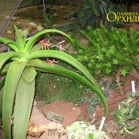 Рядом с кактусами
