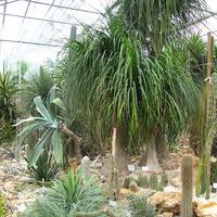 Богатейшая коллекция кактусов