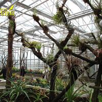 Очень интересная коллекция Тилландсий. Все растения в хорошем состоянии и прерасно арзвиты
