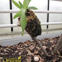 Способ выращивания в моховом