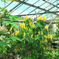 Секция тропических растений