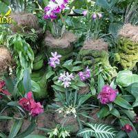 Цветник гибридных орхидей