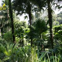 Вид вдоль дорожки сада