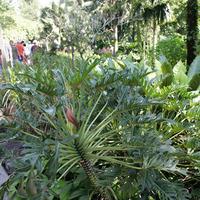Тропические растения поражают своими формами