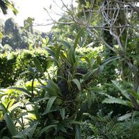 Ствол дерева, густо поросший орхидеями