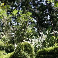 Еще одно дерево магнолии, обросшее Вандами