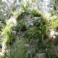 Горка с папоротниками, Цимбидиумами и  Аскоцендами