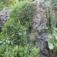 Дорожки поражают обилием цветущих орхидей в нагромождениях  камней