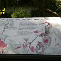Жемчужина Сингапурского Ботанического сада -    оранжерея для орхидей прохладного климата. В оранжерее растут видовые растения из Юго-Восточной Азии. На стволах деревьев виды из Южной Америки. В дальней стороне  оранжереи находятся насекомоядные растения со всех уголков земного шара.