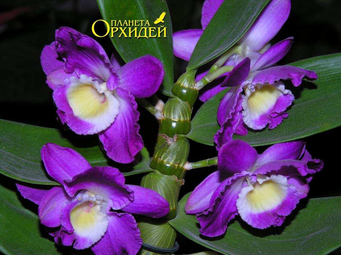 PLANTSBG  Онлайн магазин за цветя