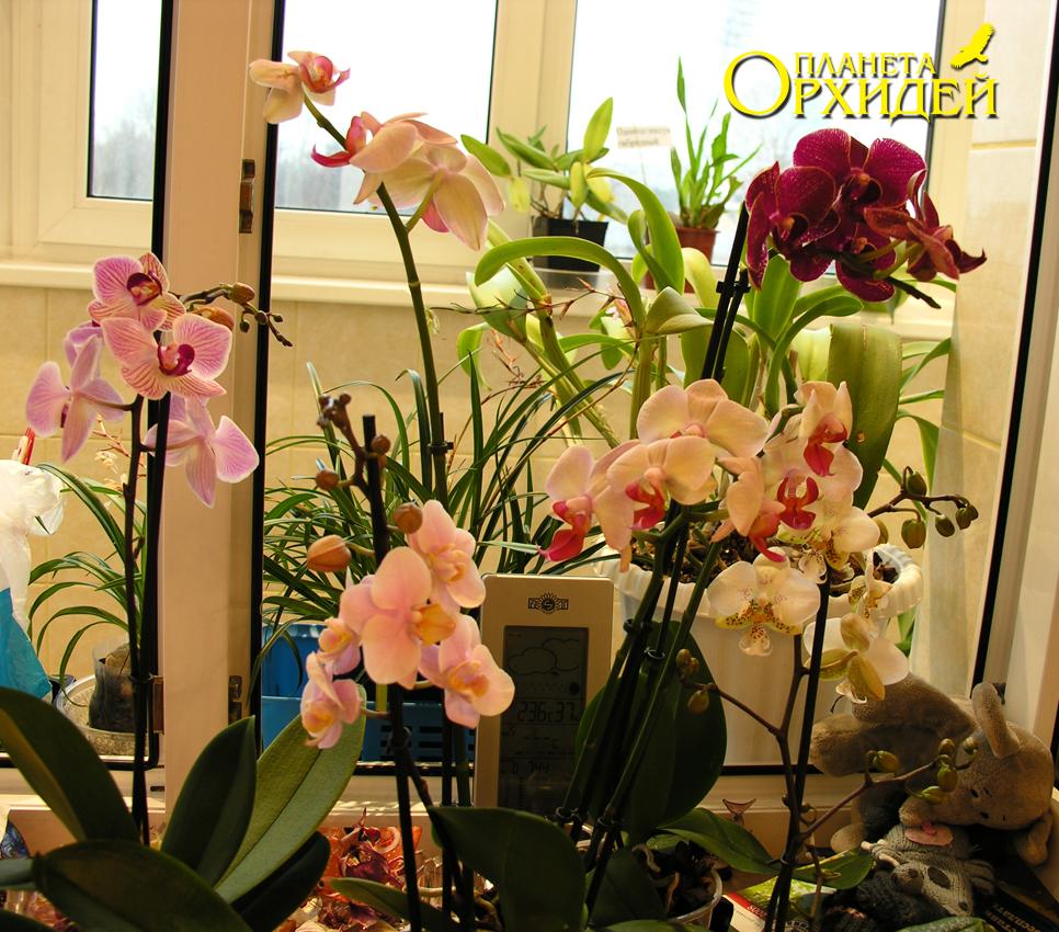когда пересаживать орхидею фото