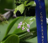 Phalaenopsis_appendiculata<br>