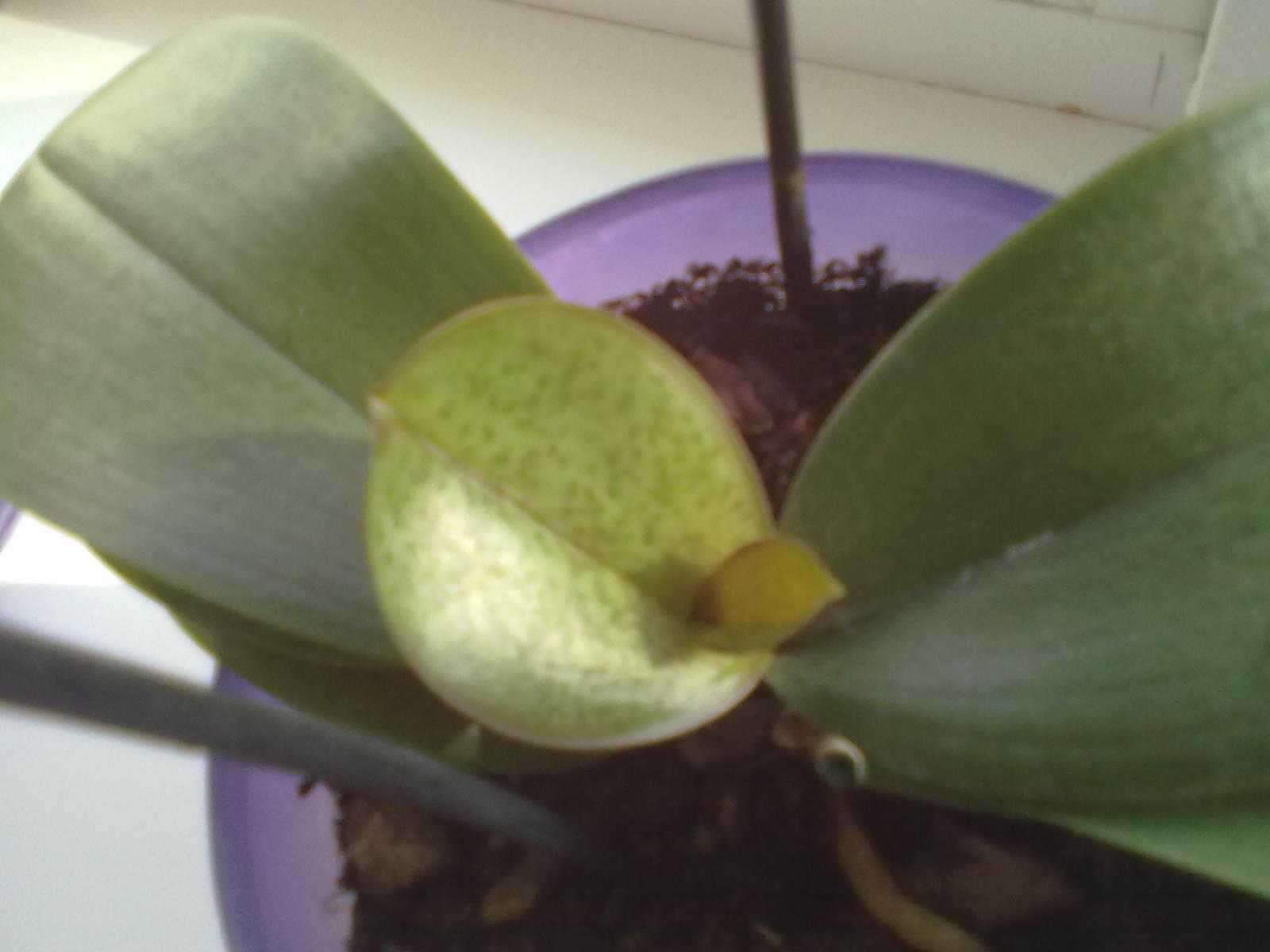 После того как орхидея отцвела что делать фото