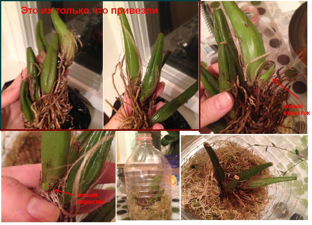 Во что сажают орхидеи 16