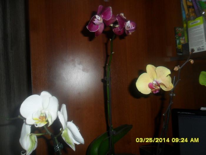 Синий Самые интересные идеи Листья орхидея иСамые интересные идеи Бечевка Бабочка галстуМастер классы по видеомонтажу