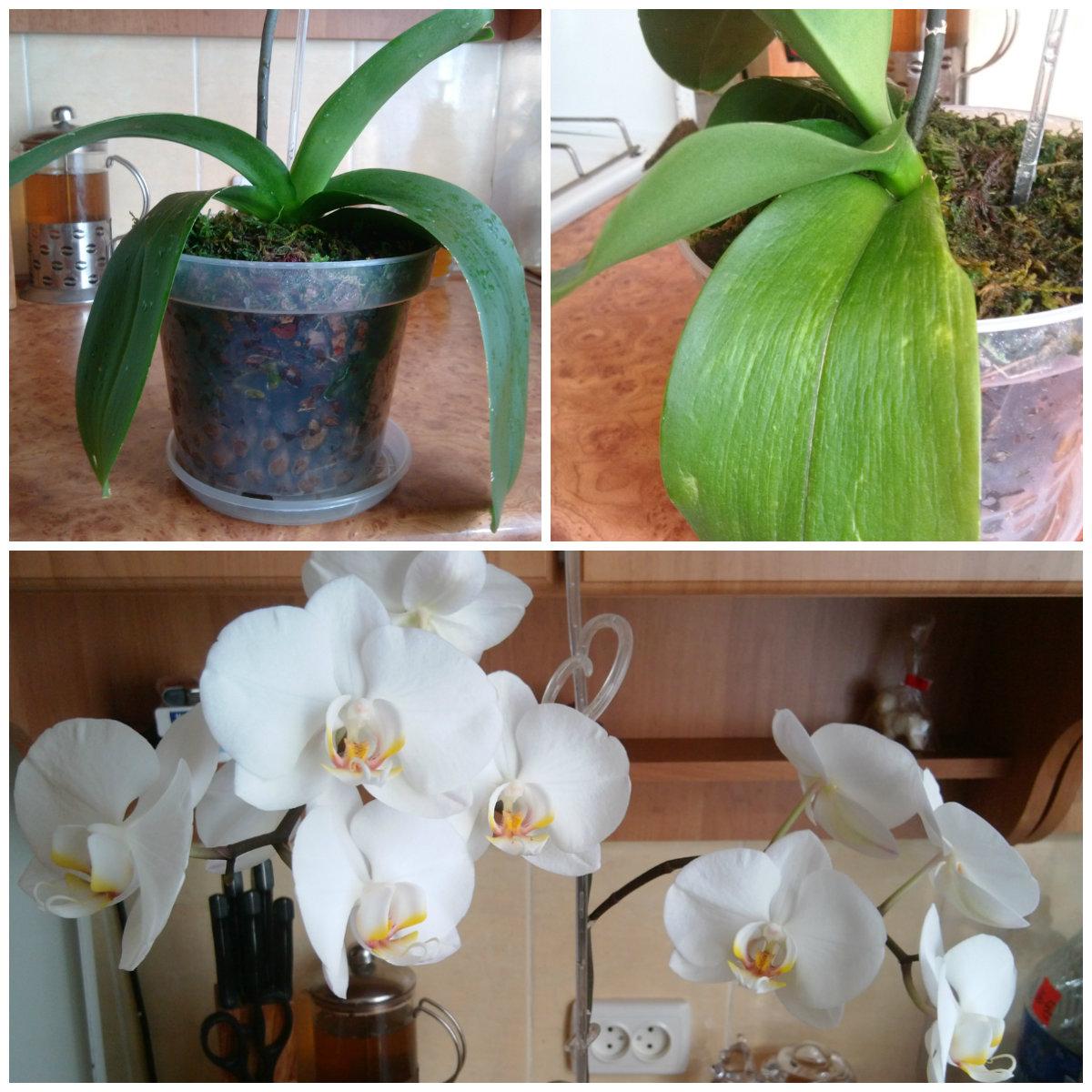 Как поливать орхидею в домашних условиях? Особенности полива 44