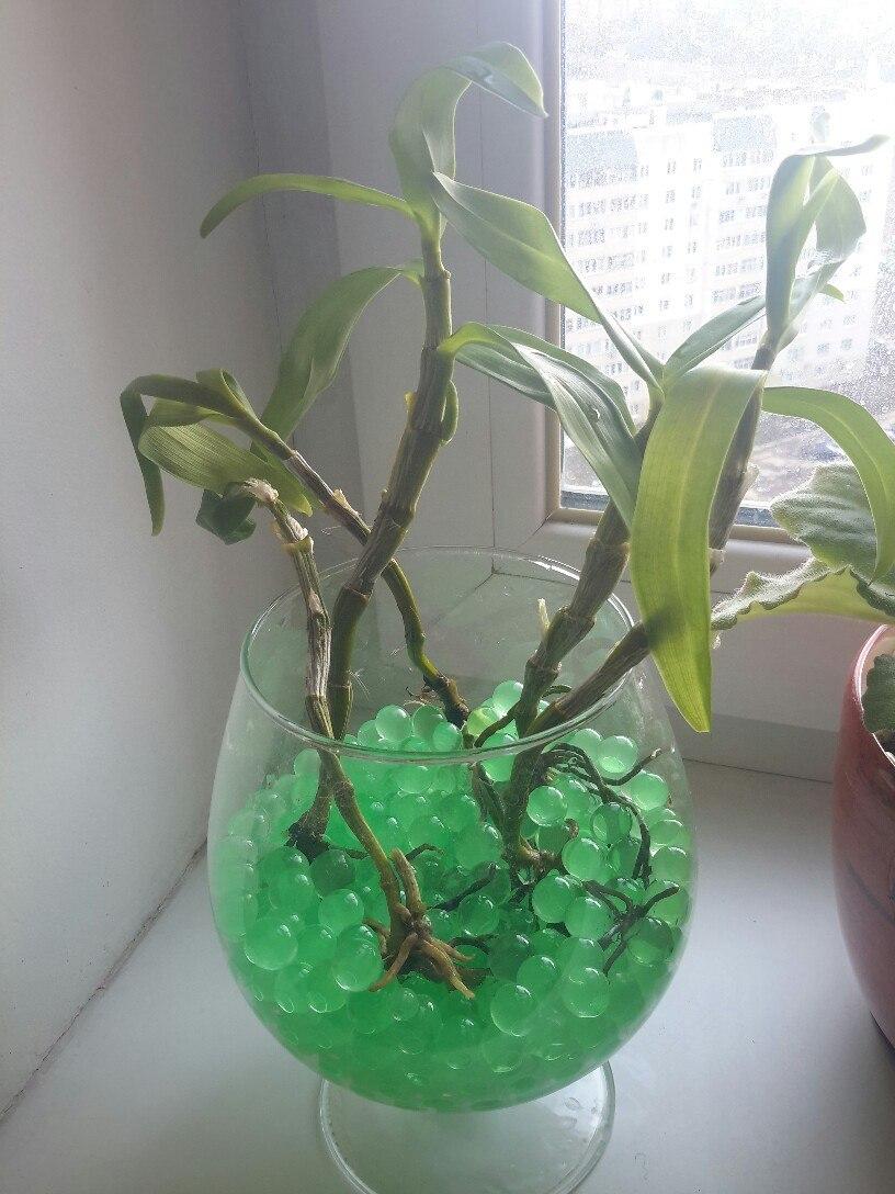 Можно ли орхидею сажать в гидрогель 25