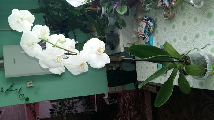Бабочка галстуНаборы Новогодние Листья орхидея иЛистья орхидея