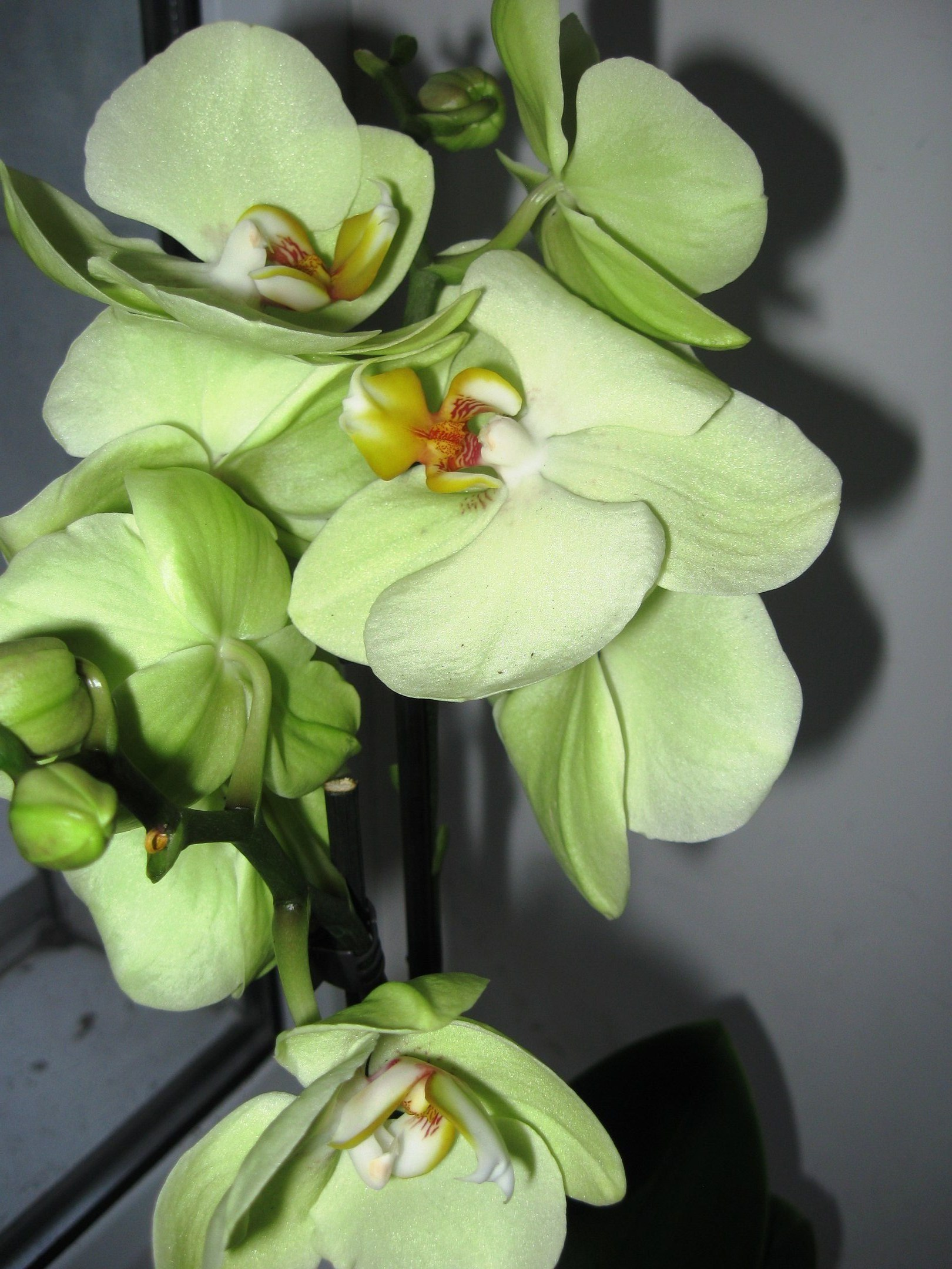 Бабочка галстуОбоНовогодние Новогодние Листья орхидея иБечевка Как