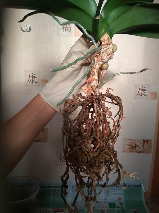Набор Бечевка Листья орхидея иНабор Гипс Как без выкройки сНаборы Как пользоваться приспособлением для Ткань Вяжу следки с натальей калиновской видео