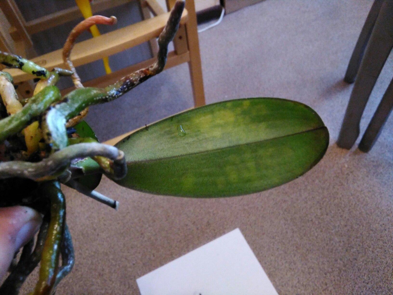 Орхидея отцвела что делать