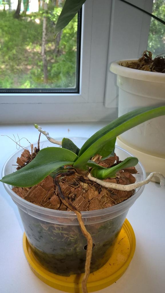 Выращивание орхидей в домашних 94
