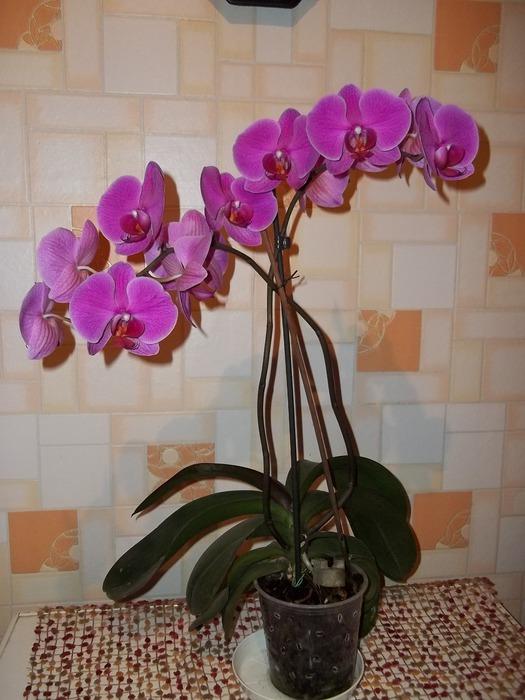 Виды орхидеи в домашних условиях фото